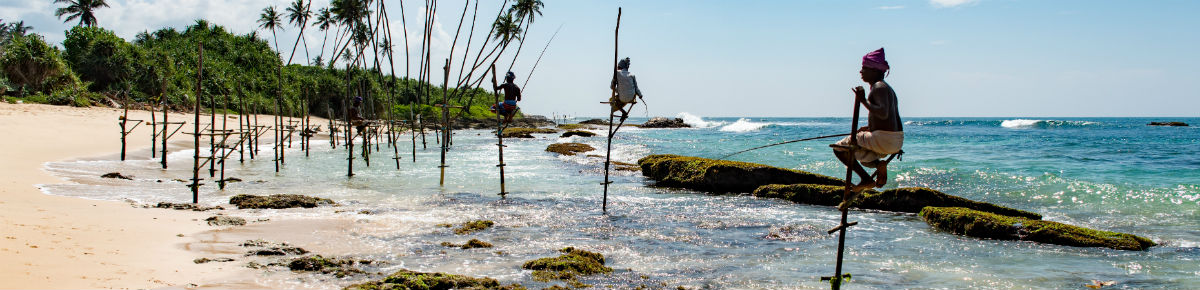 Fishing poles in Sri Lanka