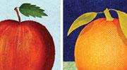 Illustration of an apple and orange.